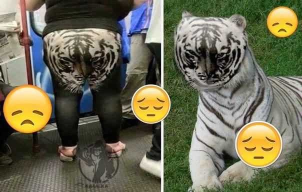 Тигр на лосинах