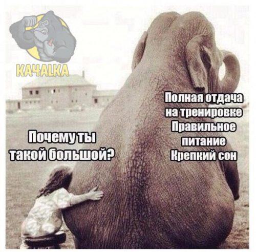 Почему слон такой большой?