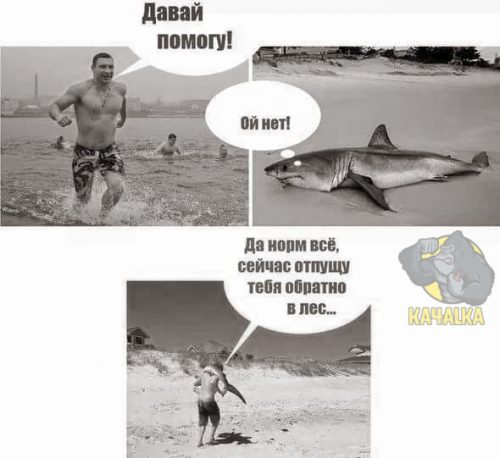 Виталий Кличко помогает животным