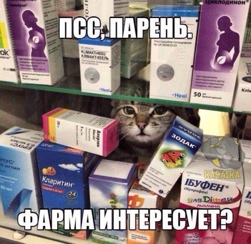 Когда зашел в аптеку за лекарствами от насморка