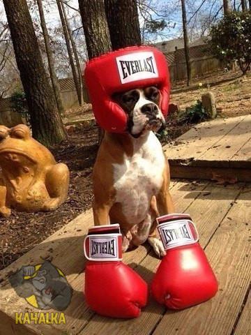 Боксер в квадрате