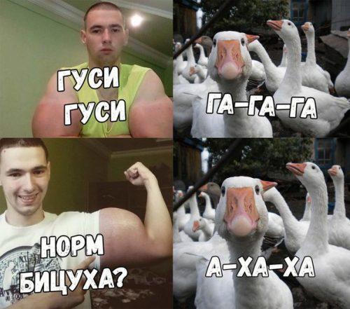 Кирилл Терешин и гуси