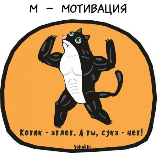 Котик — атлет, а ты, сука, нет