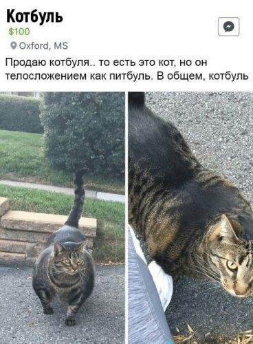 Котбуль