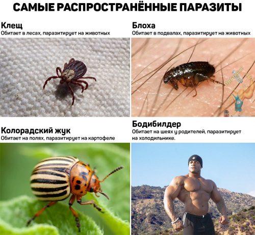Самые распространенные паразиты